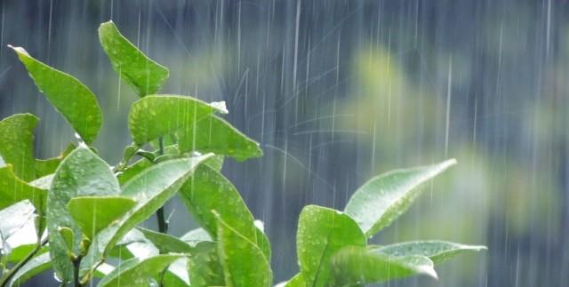 「五月雨式で…」「五月雨で…」の意味や読み方、使い方は?|例文や言葉の由来を知ることで理解し正しく使おう!