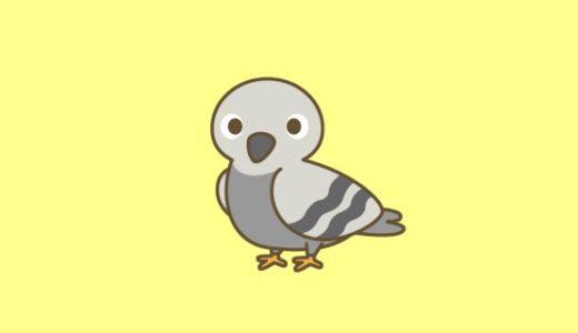 鳩を住みつけない様にするための7つの知識|ドバトから被害を受けないためにも正しい知識を身に付けよう