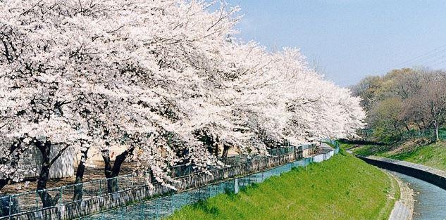 【春の雑学32選】役立つ豆知識で春のイベント盛り上がり度MAX!|日常で役立つうんちくを厳選しました!